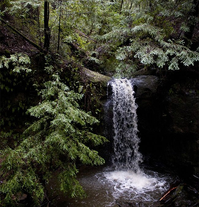 Big Basin Redwood Forest–California's Oldest State Park