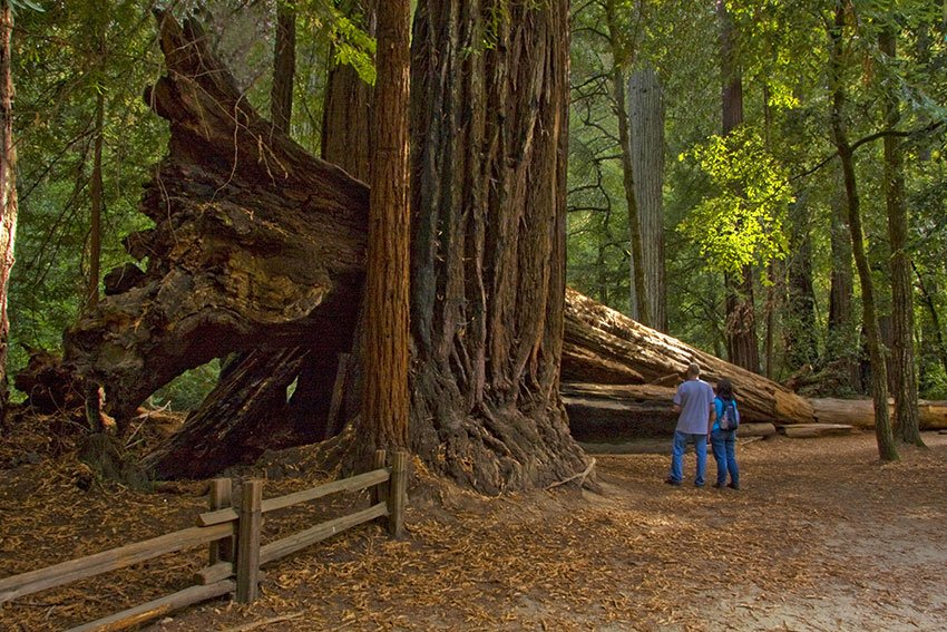 Big Basin Redwood Trail